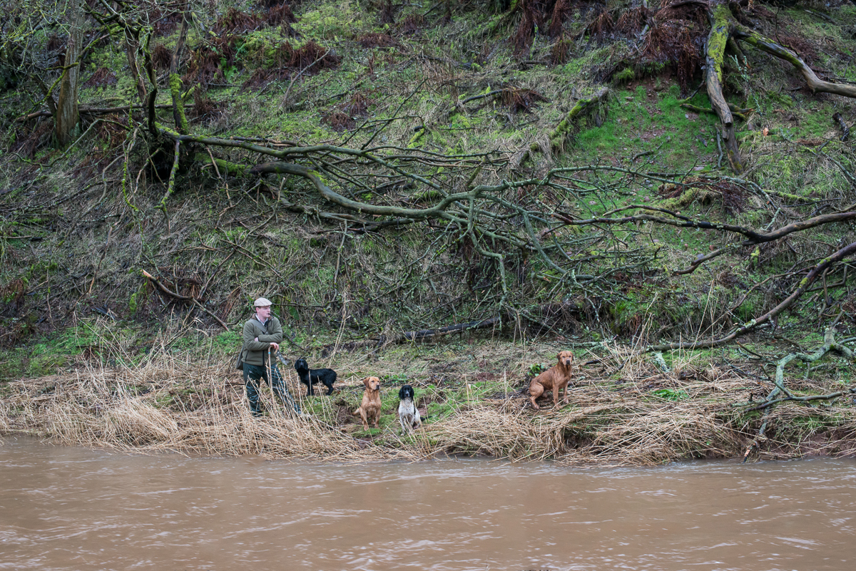 Handler with Dogs Across River