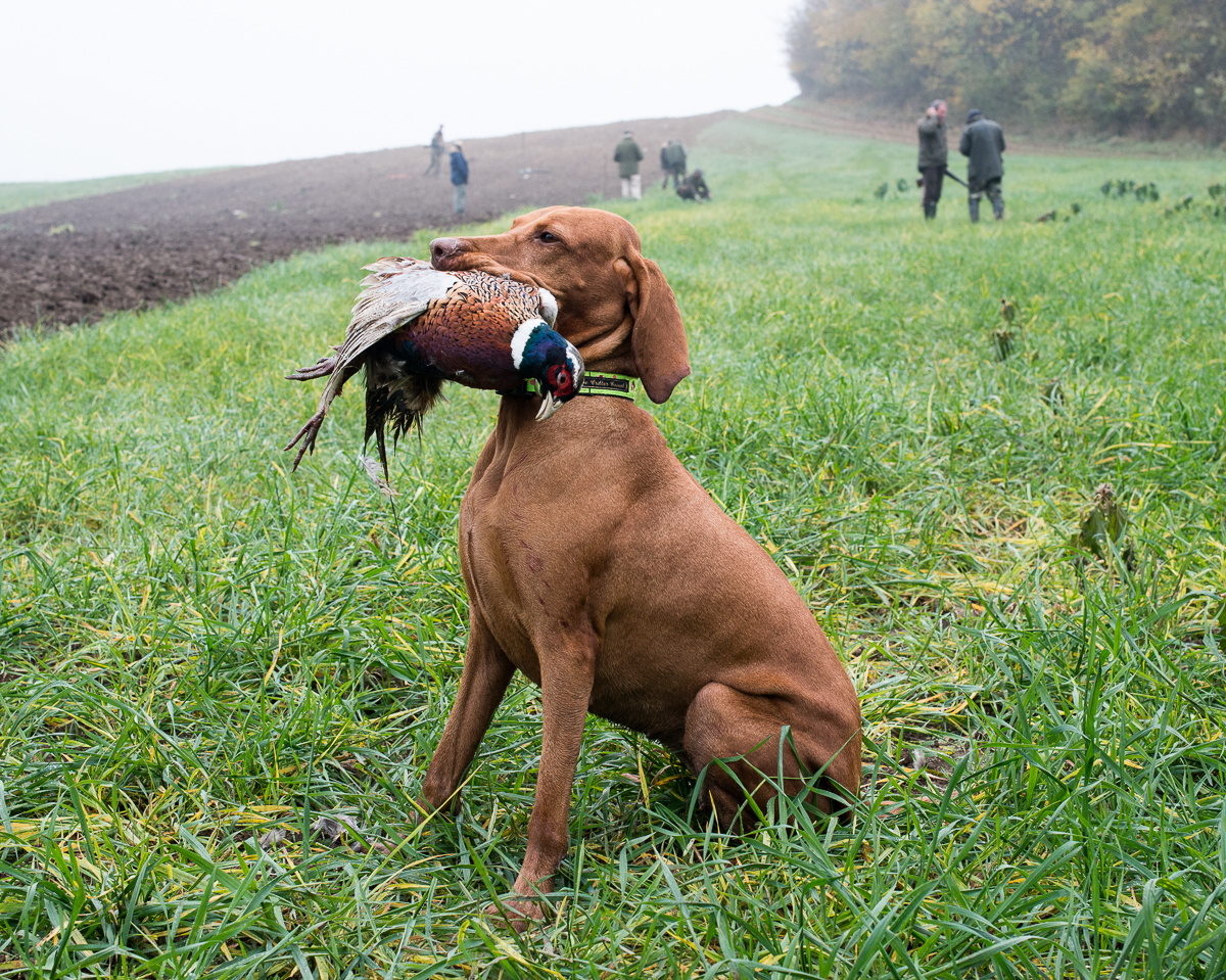 Visala with Pheasant